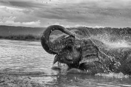 Kapiel-slonia-w-rzece-w-Nepalu