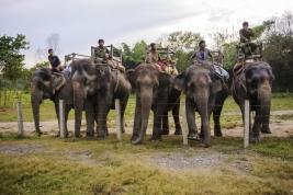 Przewozy-na-sloniach-w-Chitwan