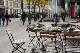Golebie-wyjadajace-resztki-z-talerzy-w-ulicznej-restaruacji-w-Paryzu