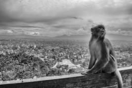 Malpa-i-widok-na-Katmandu