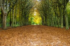jesien;-las;-St-Germain-en-Laye;-drzewa;-liscie;-brazowe