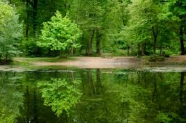 lawka;-las;-St-Germain-en-Laye;-zielony;-woda