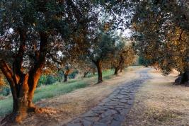 drzewa;-oliwki;-Toskania;-Wlochy;-sciezka