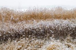 trzciny;-jezioro;-zarosla;-snieg;-zima;