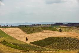 Wlochy;-Toskania;-winnice;-pola