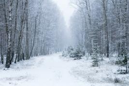 zima;-las;-drzewa;-snieg;-bialy