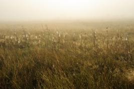trawa;-pajeczyny;-mgla;-laka;-Wieliszew;-rosa;