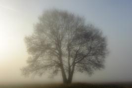 drzewo;-mgla;-laka;-Wieliszew
