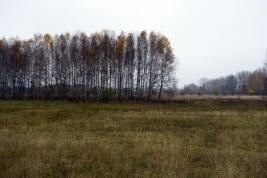 Drzewa-na-lakach-wieliszewskich