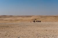 karawana,-turysci,-Giza,-Egipt,-turystyka,-pustynia,-Sahara